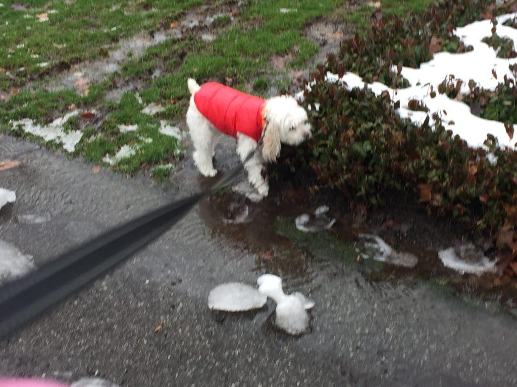 Pet Friendly Ice Melt