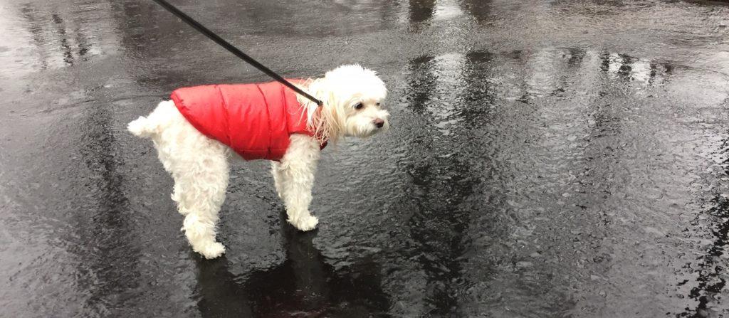 Rain, rain and more rain…
